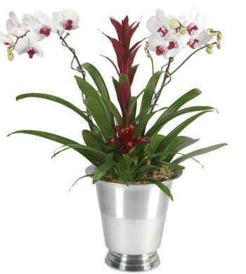 Tropical Elegance Orchid Garden with wine chiller and plant pins