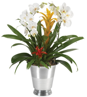 Silver Tradition Orchid Garden with wine chiller