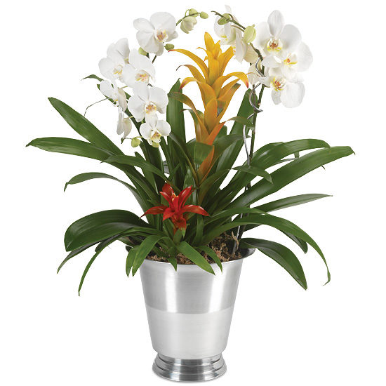 Silver Tradition Orchid Garden with wine chiller and two plant pins