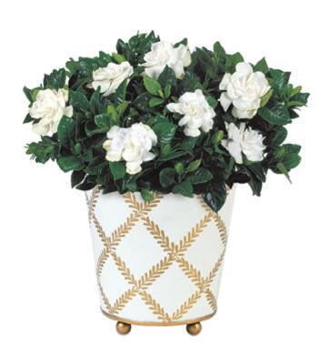 Buy Plants Online - Indoor Plant Delivery   Calyx Flowers