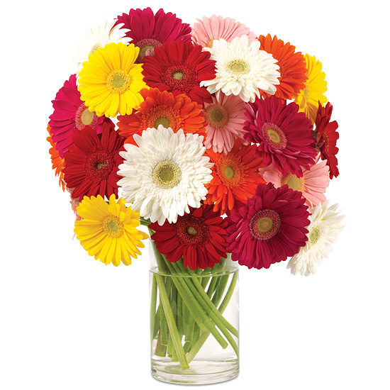 Gerbera-Chic Daisy Bouquet with vase