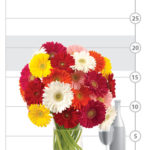 Gerbera-Chic Daisy Bouquet shown to scale