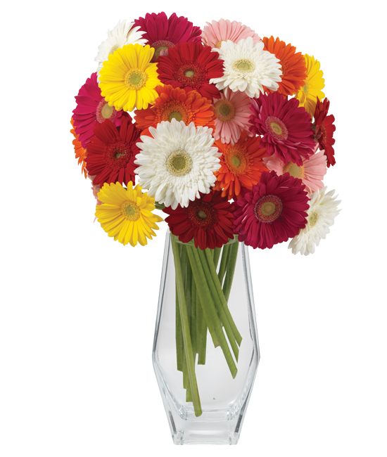 Gerbera Daisy Arrangements Vases: Gerbera-Chic Daisy Bouquet