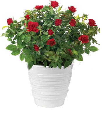 Buy Plants Online - Indoor Plant Delivery | Calyx Flowers