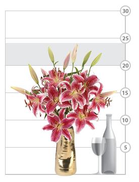 Palm Beach Lilies shown to scale