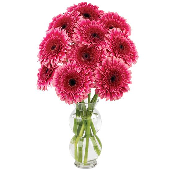 Preppy Pink Gerbera Daisies with vase