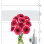 Preppy Pink Gerbera Daisies shown to scale