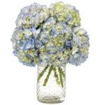 SoHo Hydrangea with signature glass vase