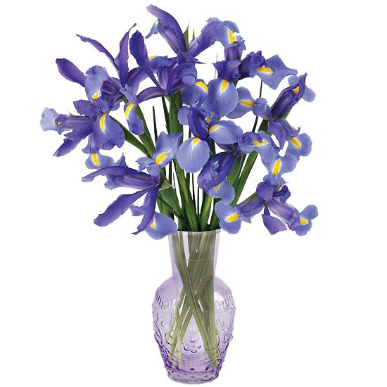 Lavish Lavender Iris with vase