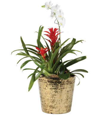 Holiday Miracle Orchid & Bromeliad Garden