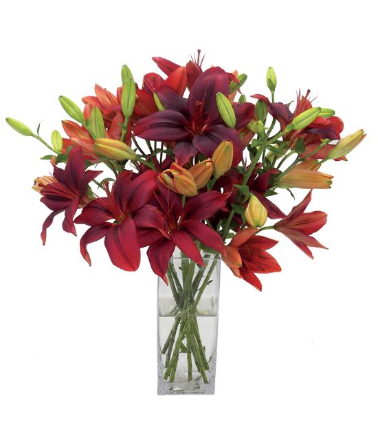 Dec - Burgundy Charm Lilies