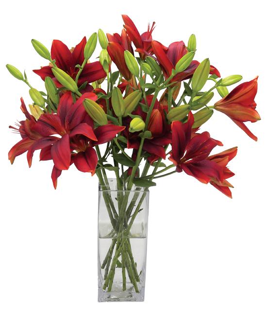 Oct - Burgundy Charm Lilies