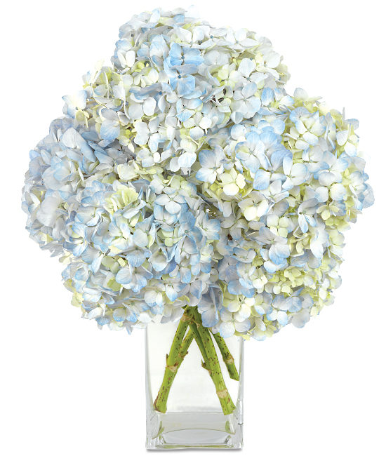 Apr - Blue Hydrangea
