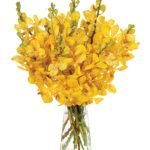 Apr - Speckled Yellow Mokara