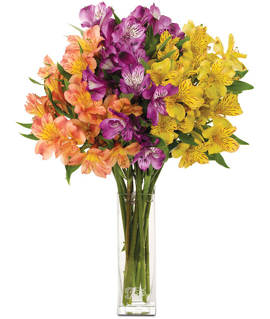 Aug - Mixed Alstromeria