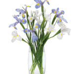 Aug - Mixed Iris Bouquet