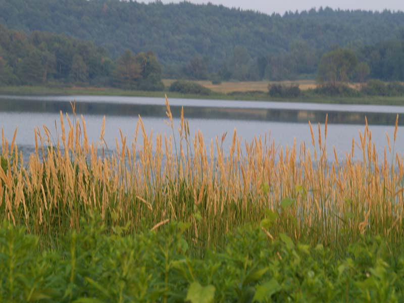 Colchester Pond with view of golden grass