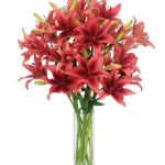 Dec - Monte Negro Lilies