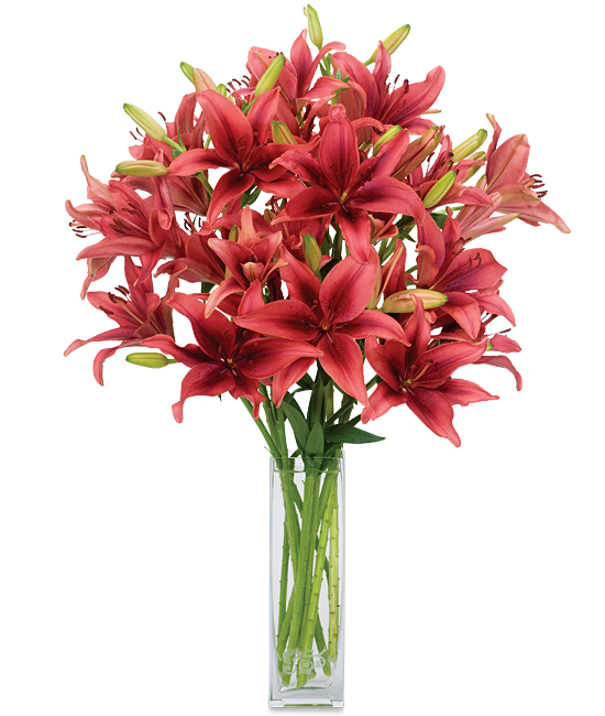 Dec - Dinamix Lilies