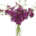 Feb - Natasha Dendrobiums