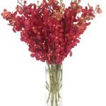 Feb - Red Mokara Orchids