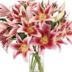 Feb - Starfighter Lilies