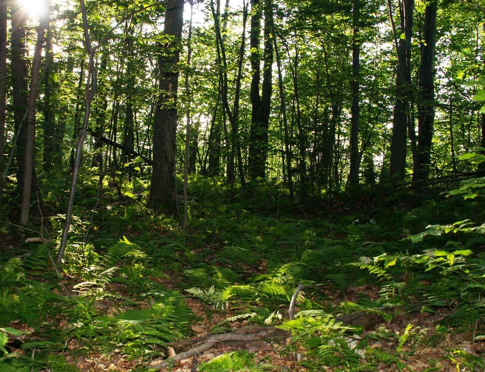 Ferns on the Ridge of Passing the Horizon