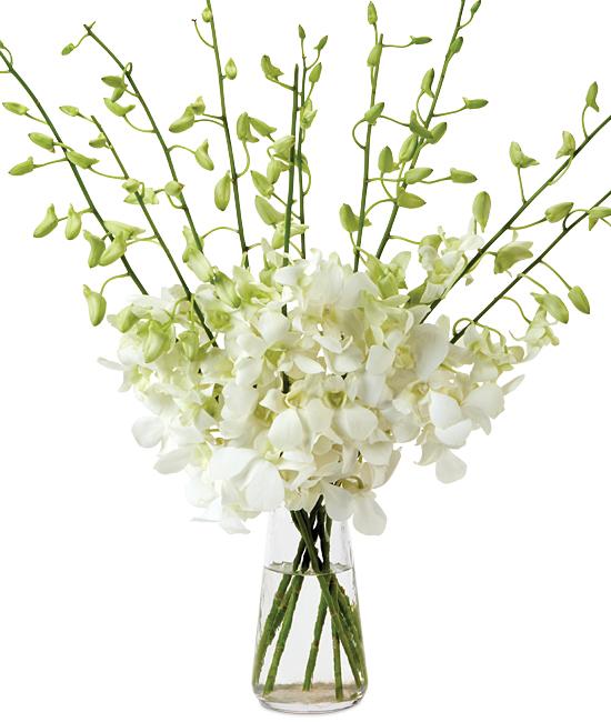 Jul - White Dendrobiums