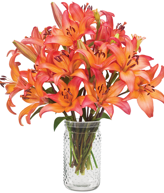 Jul - Sunset Asiatic Lilies