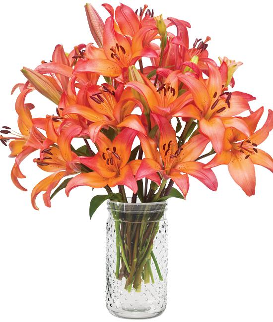 Jul - Sunset Asiatic Lilies