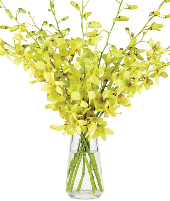Jun - Fatima Dendrobiums