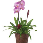 Jun - Orchid & Bromeliad Garden