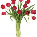 Mar - Red Dutch Tulips