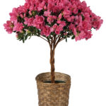 May - Braided Azalea Topiary