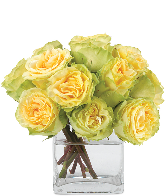 May - Finesse Yellow Roses