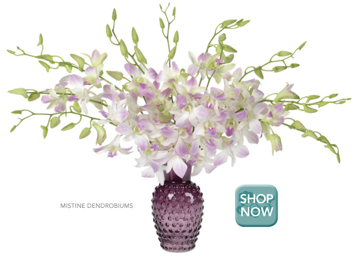 Luxury Rewards Mistine Dendrobiums