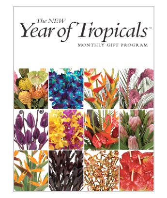 The Year of Tropicals