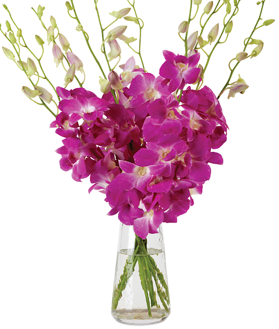 Nov - Queen Pink Dendrobiums