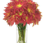 Nov - Red Rover Mums