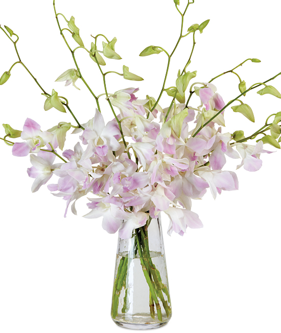 Oct - Misteen Dendrobiums