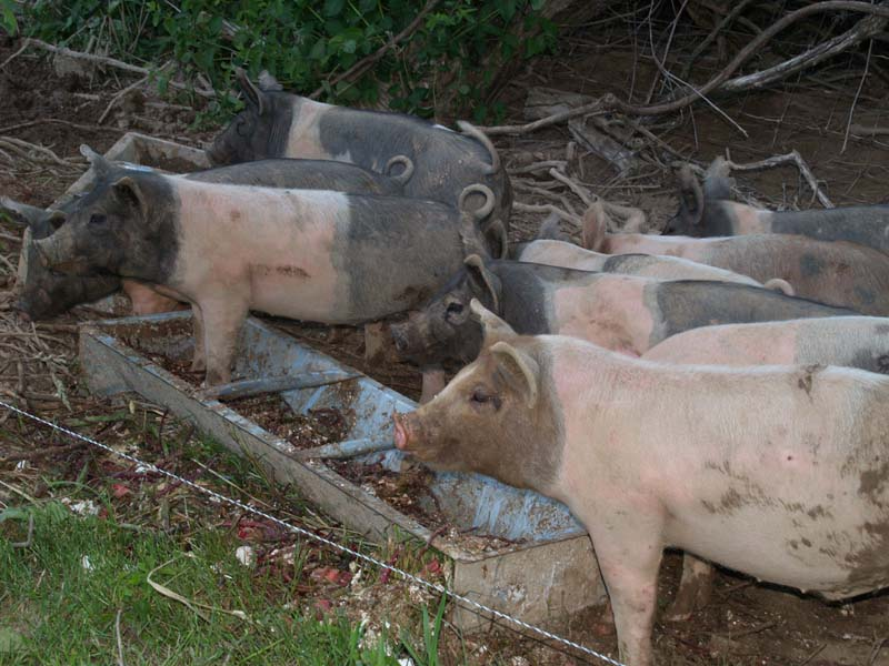 Enjoying their dinner & a nice summer evening at Shelburne Farms