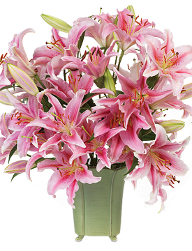 The Lily: Colorful & Fragrant