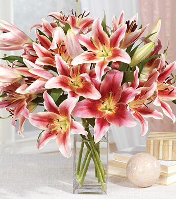 Ultimate Year of Lillies