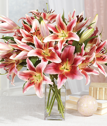 The Ultimate Year of Lilies