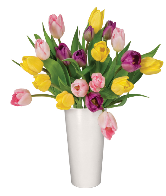 FEB - Mixed Tulips
