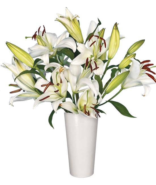 JAN - Stargazer Lilies