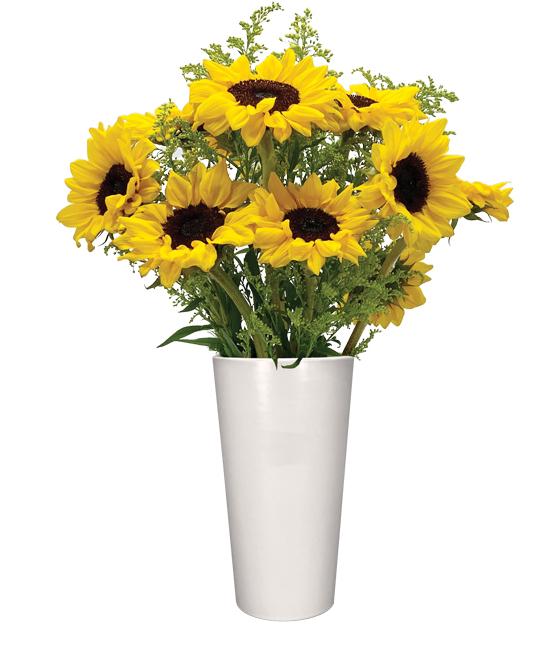 OCT - Sunflowers & foliage