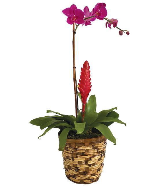 Jan - Orchid & Bromeliad Garden