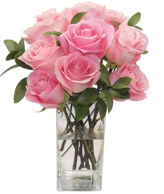 May - Hermosa Rose