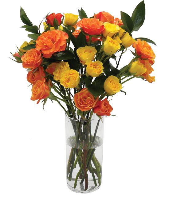 Nov - Spray Roses